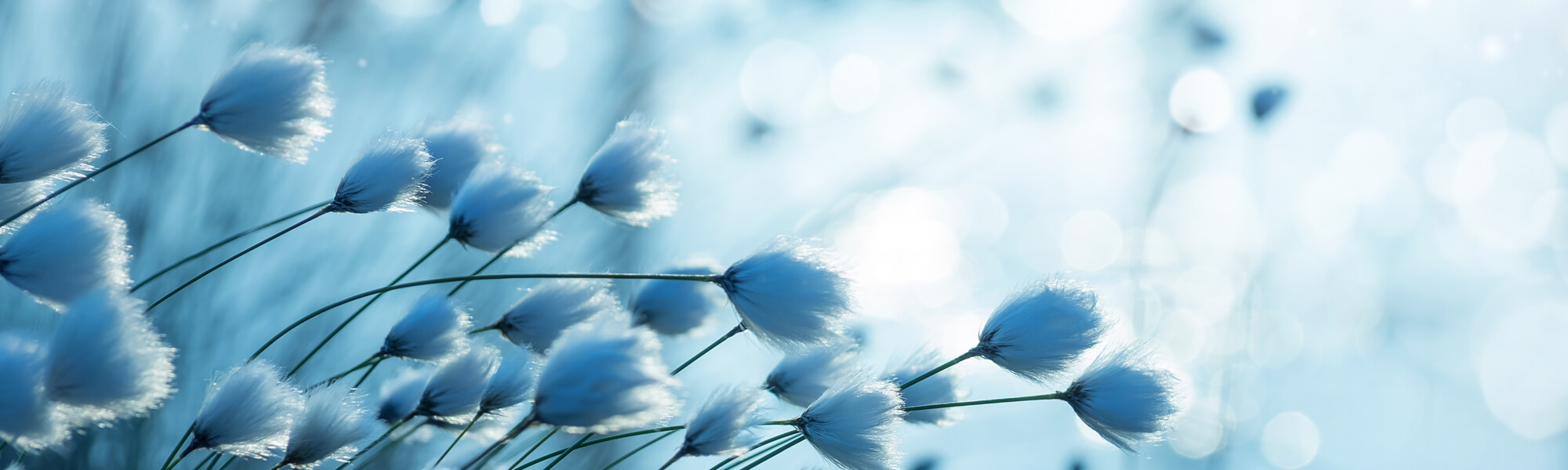 background-coton-bleu